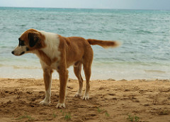 dog at playa guardalavaca